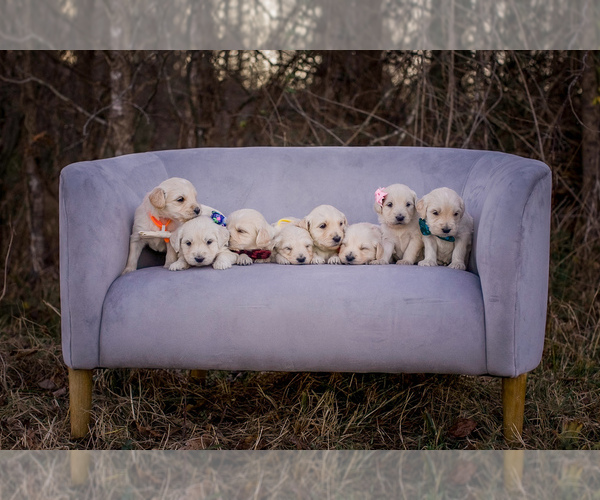 puppies in a chair
